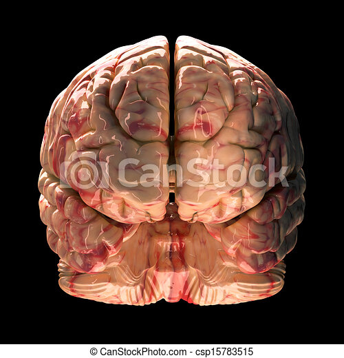 Side View Anatomy Anatomy Brain Front View on
