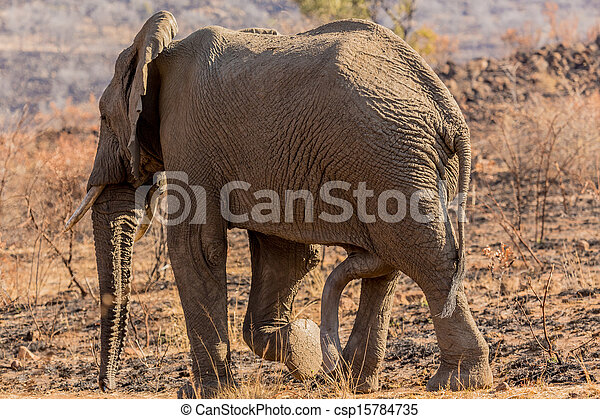 Six legged Mammal - csp15784735
