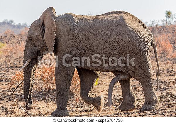 Six legged Mammal - csp15784738