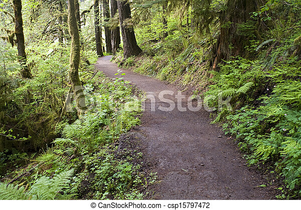 Trail to Punch Bowl Falls Oregon Forest Northwest - csp15797472