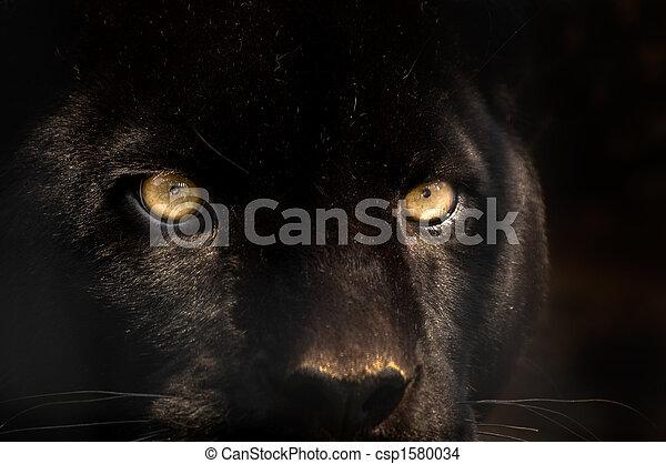 黑色, 豹 - csp1580034