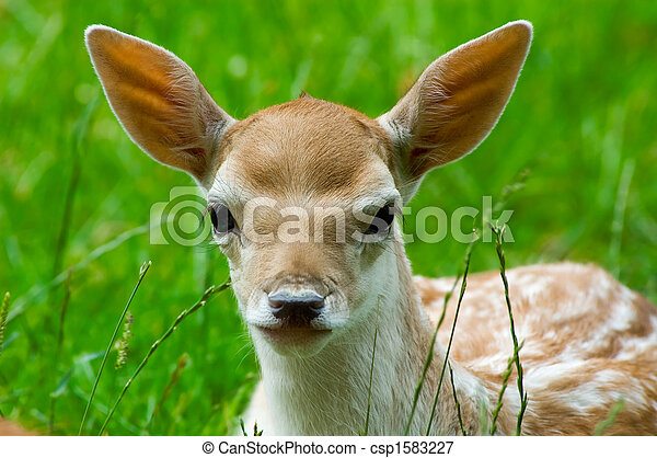 portrait of a cute baby deer