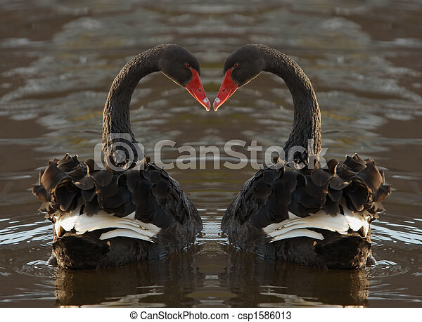 Romantic Swans - csp1586013