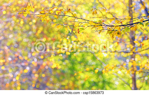 Autumn leaves in brunches - csp15863973