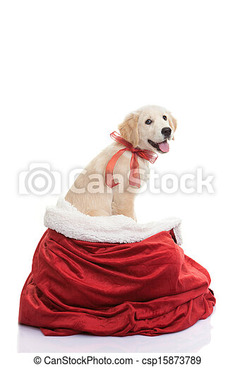pet gift for christmas holiday - csp15873789