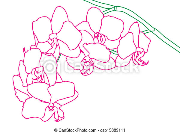 Vector Clip Art of Orchid flowers csp15883111 - Search Clipart ...