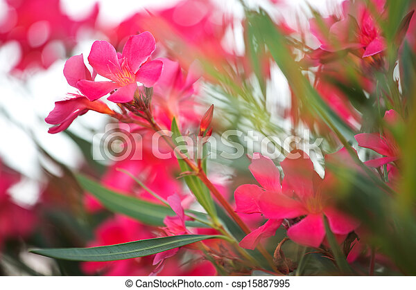 Photo of pinky rural flowers - csp15887995