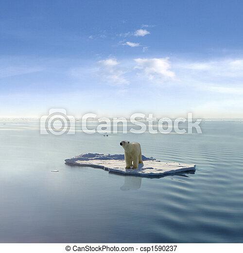 polare, ultimo, orso - csp1590237