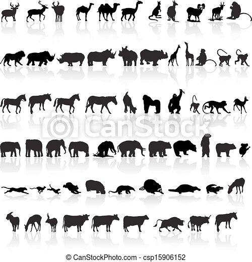 Animal set - csp15906152