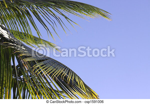 Blue sky Palm Frond - csp1591006