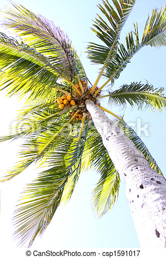Palm Tree Exposed - csp1591017