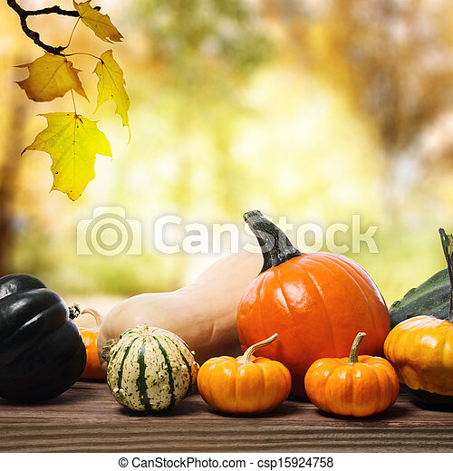 Pumpkins and squashes with a shinning fall background - csp15924758