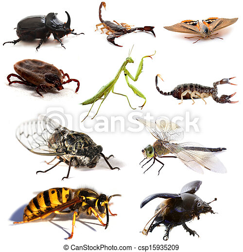 insects and scorpions - csp15935209
