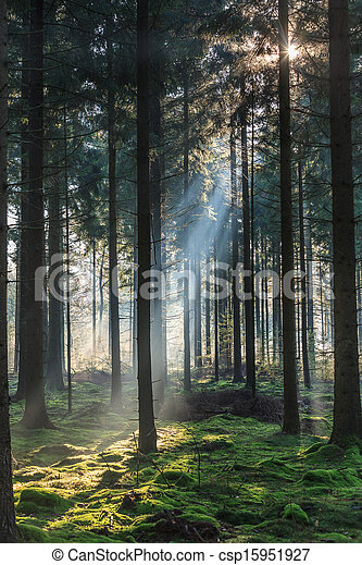 morning light shining through the trees in a forest - csp15951927