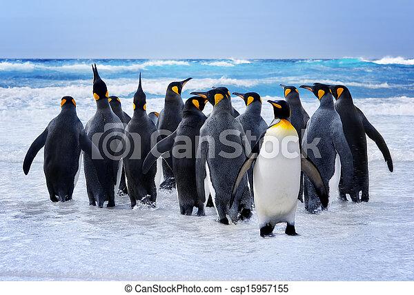 國王, 企鵝 - csp15957155