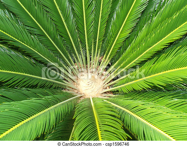 centro, verde, palma, planta - csp1596746