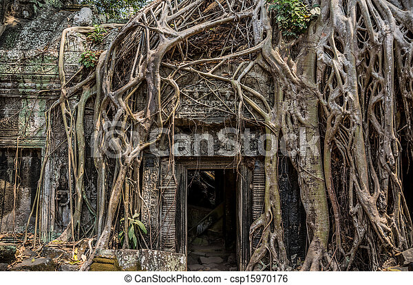 Trees roots growing over Angkor Wat Ruins, Cambodia, Asia. Tradition, Culture and Religion. - csp15970176