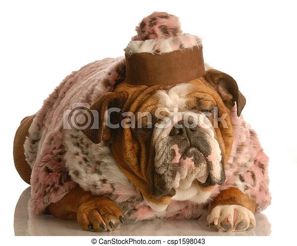 photos de personne agee chien anglaise bouledogue porter rose csp1598043 recherchez. Black Bedroom Furniture Sets. Home Design Ideas
