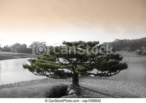 Zen Tree - csp1598842