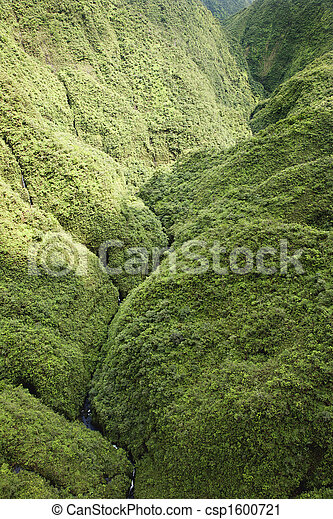 maui, rainforest. - csp1600721