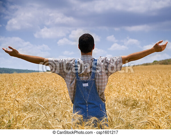 farmer in wheat field with arms spread out - csp1601217