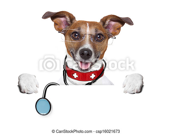 medical doctor dog - csp16021673