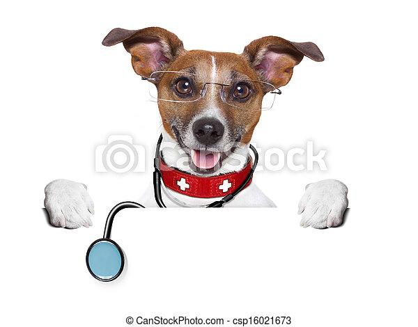 medical doctor dog - csp16021673
