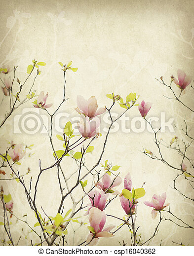 magnolia flower with Old antique vintage paper background - csp16040362
