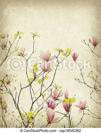 magnolia flower with Old antique vintage paper background - csp16040362
