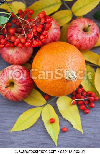 Harvested pumpkin, apples, ashberry and fall leaves around - csp16048384