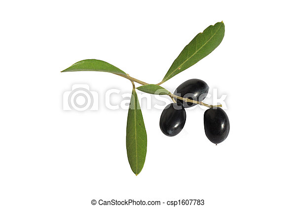 olives on branch - csp1607783