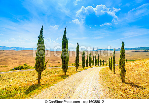 Cypress Trees rows and a white road rural landscape in val d Orcia land near Siena, Tuscany, Italy, Europe. - csp16088012
