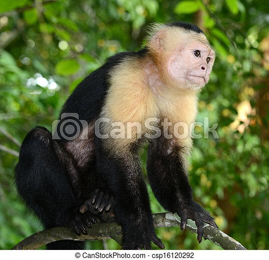 monkey island 2 deutsch download