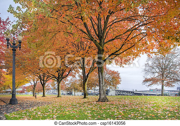 Maple Trees in Portland Downtown Park in Fall - csp16143056