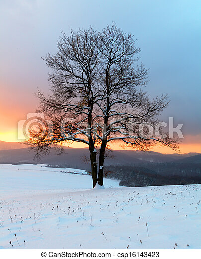 Alone tree in winter sunrise landscape - nature - csp16143423