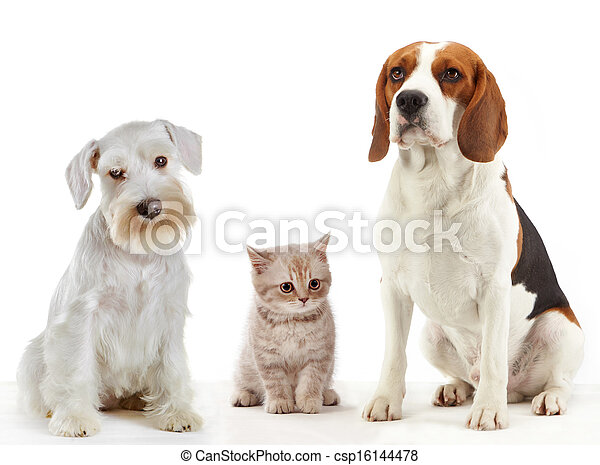 three domestic animals cat and dogs - csp16144478