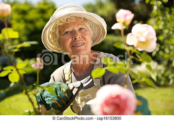 Senior woman working in the garden - csp16153800