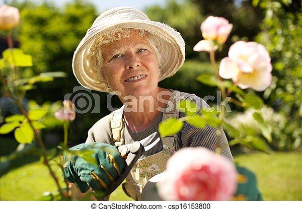 Senior woman working in the garden - csp16153800