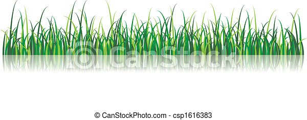 Vector Grass Illustration - csp1616383