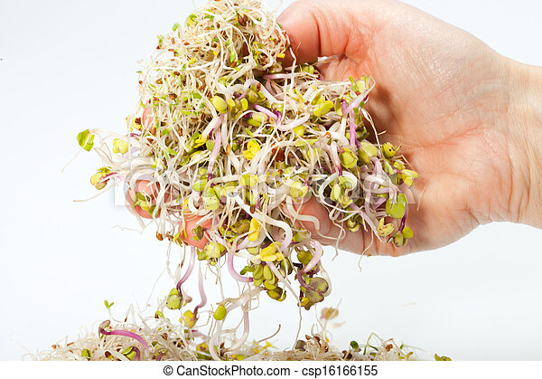 how to keep alfalfa sprouts fresh