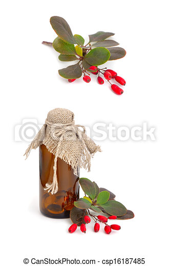 Barberry and pharmaceutical bottle. - csp16187485