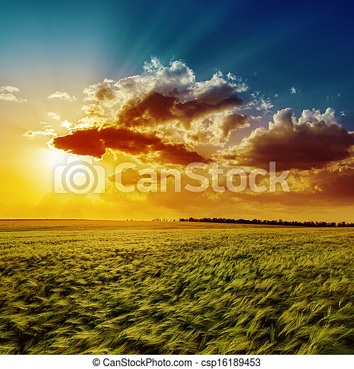 agriculture green field and orange sunset - csp16189453