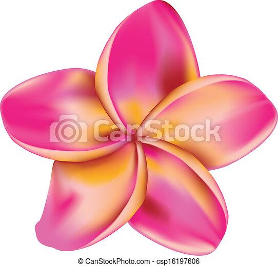 vector clipart of plumeria flower  pink plumeria, frangipani, Natural flower