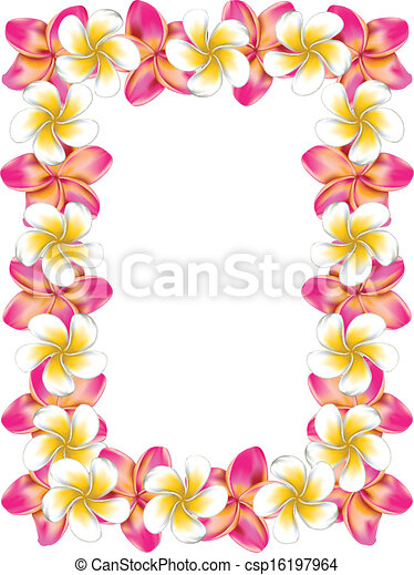 Plumeria Flower Line Drawing White and pink frangipani