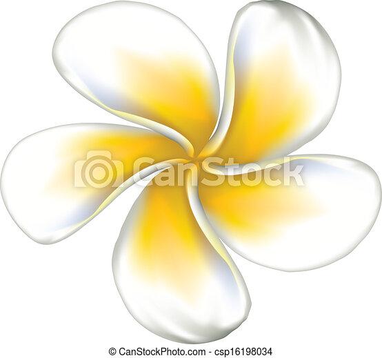 Frangipani Flower Drawing Vector White Plumeria