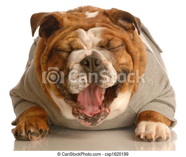 dog laughing - csp1620199