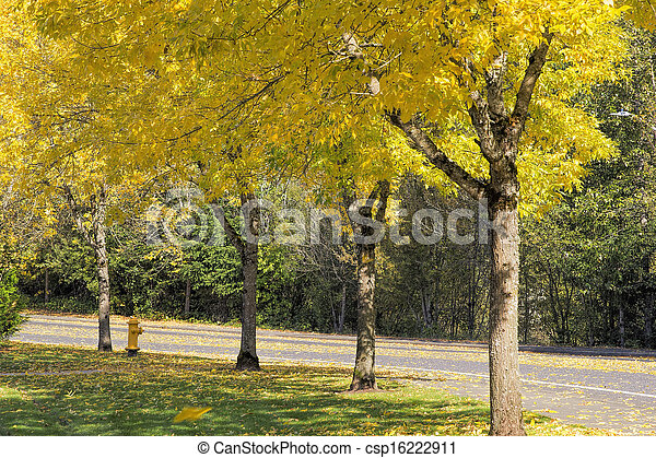 Falling Leaves from Neighborhood Beech Trees - csp16222911