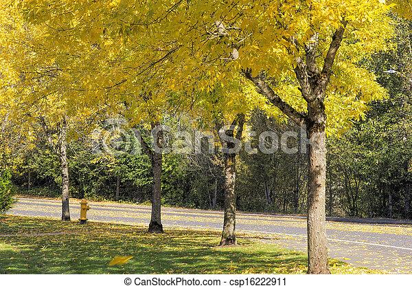 Falling Leaves from Neighborhood Beech Trees - csp16222911