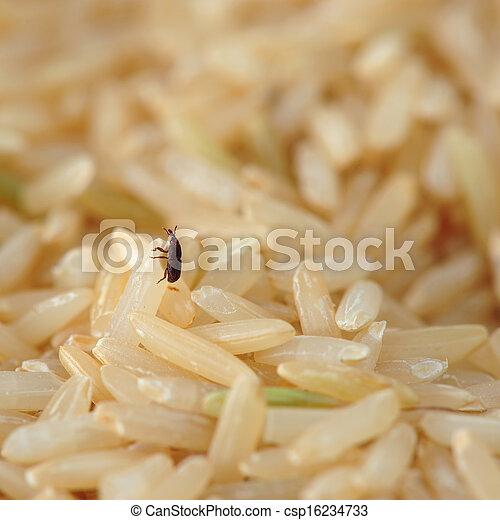 Photos de charan on riz csp16234733 recherchez des - Charancon du riz dangereux ...