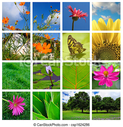 collage, primavera, naturaleza - csp1624286